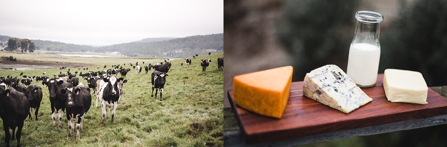 Ashgrove Farm and Ashgrove Cheese